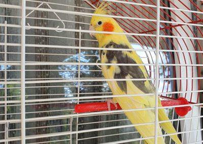 Dom za stare suncev breg papagaj